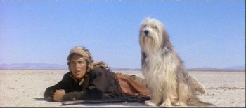 a-boy-and-his-dog-don-johnson-and-tiger1