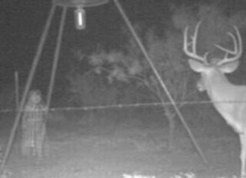 deer and apparition