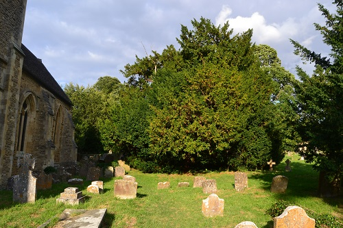 The yew in the churchyard.