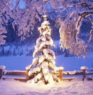 Black Gate Christmas Tree-small