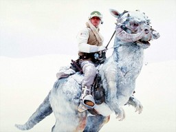 Luke would be more buff if he wasn't such a tauntaun riding wuss.