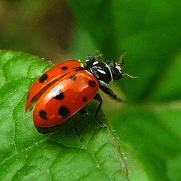 I'm sorry, ladybug. I'm so very, very sorry.
