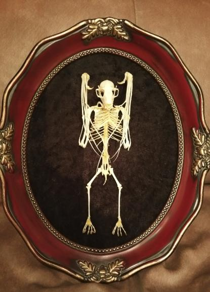 Bat Skeleton courtesy of Blood Brood FX