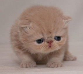Some of this article's image searches were scarring. Sad kitten is sad by lack of Google foresight.