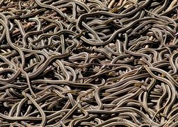 A snake pit is that gift that keeps on giving. And taking.
