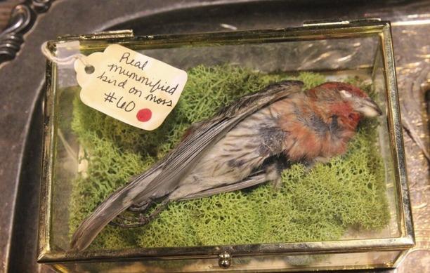 Real mummified bird-small