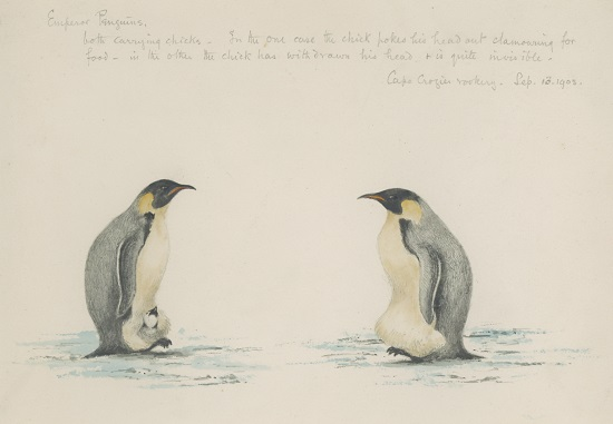 Dr Edward Adrian Wilson Emperor Penguins, Cape Crozier Rookery