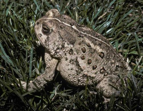 queen-of-toads-small