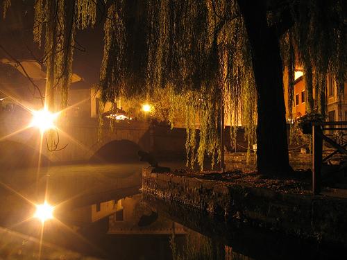 wheepig-willows-at-night