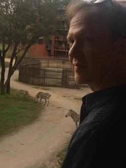 howard-zebras-small