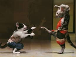 cats martial arts