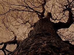 eviltree