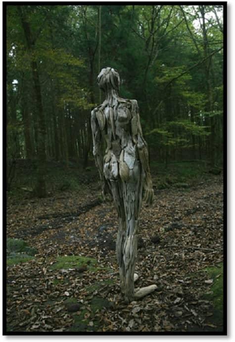 Disturbing Wood 4